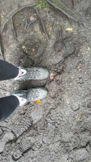 Mud Mud Mud