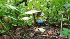 Do you think it is an umbrella? oh Minion! it is a muchroom!